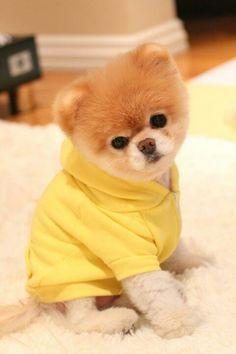 Can I Give My Dog Dulcolax