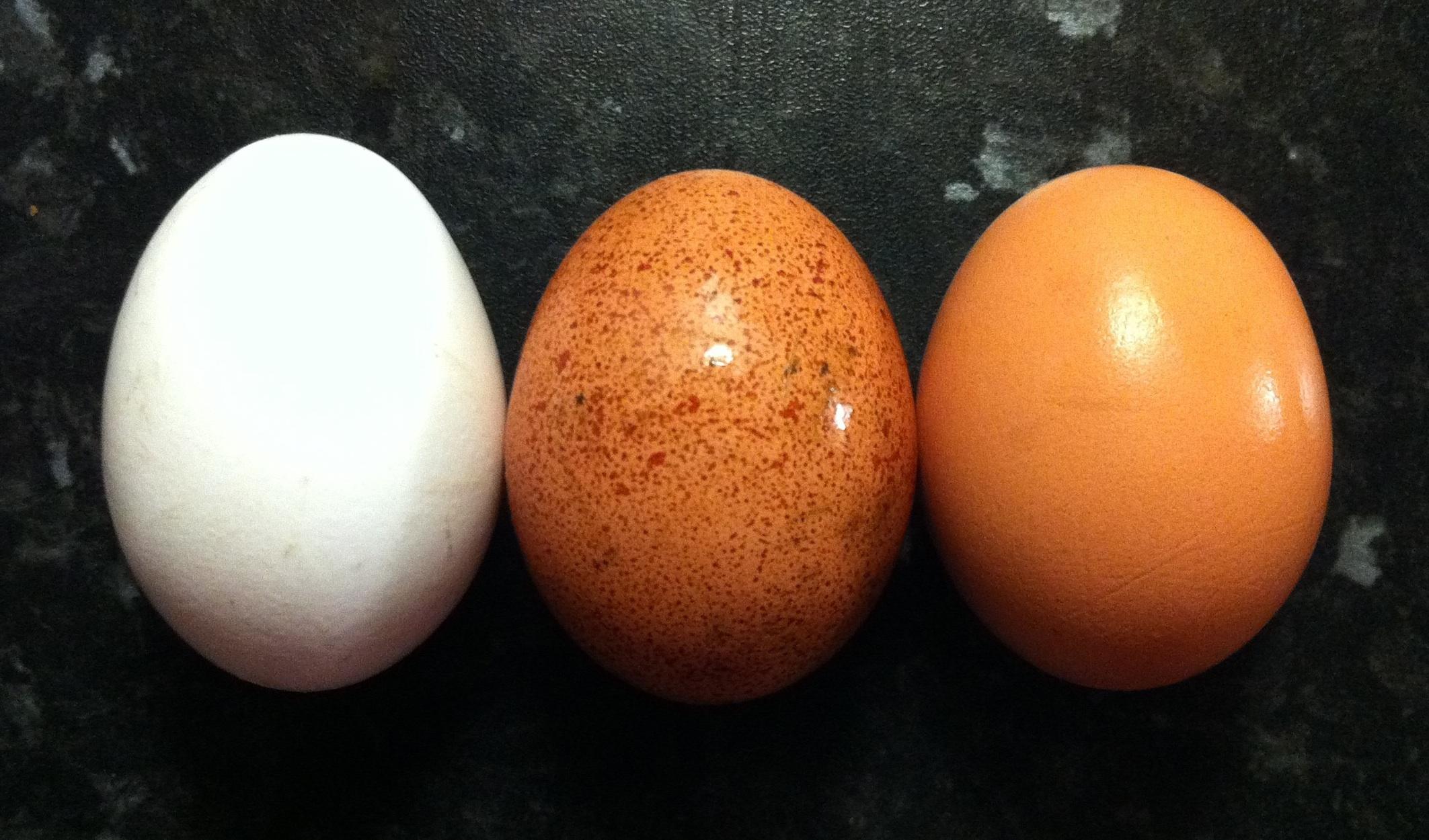 Can a dog eat egg shells?