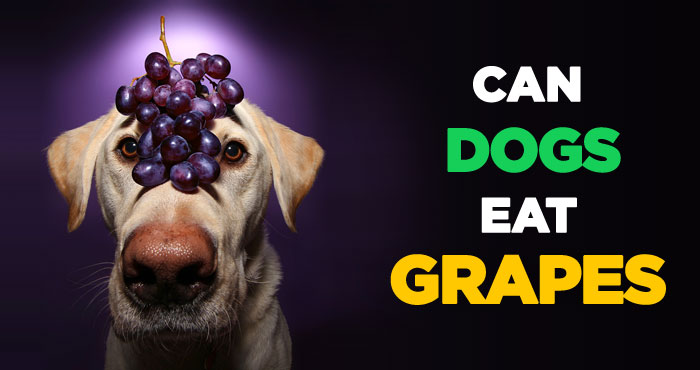 Grape and Raisin Poisoning in Dogs