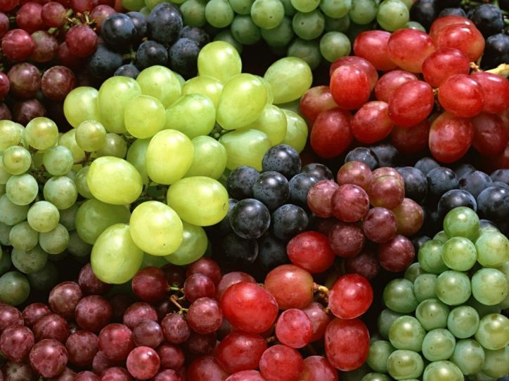 can dogs eat grapes