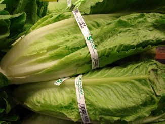 is romaine lettuce safe for dogs