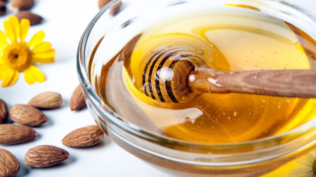 manuka honey for dog ear infections