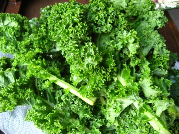 my dog ate kale what should i do