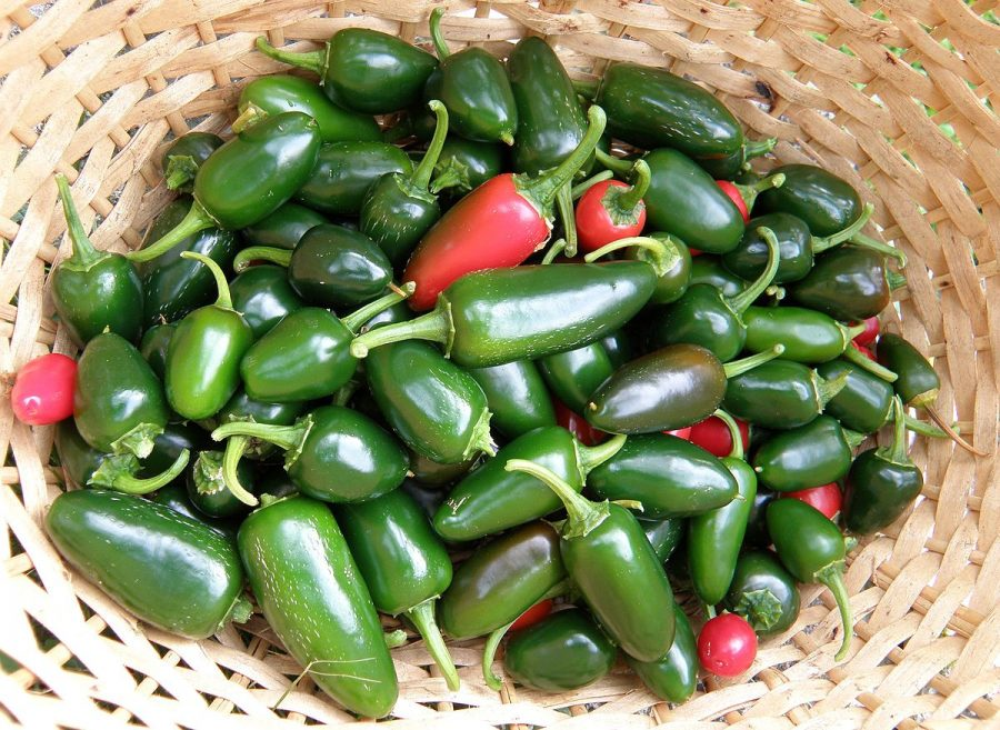 Are hot sauce and jalapenos harmful to dogs