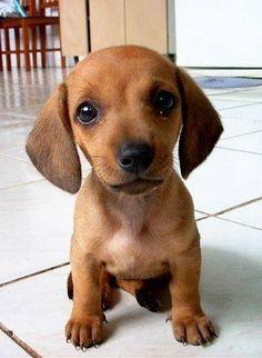 Smptoms of Giardia in dogs
