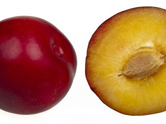 are plums ok for dogs