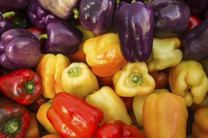 Can Dogs Eat Capsicum (Bell Peppers)