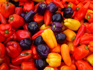 are bell pepper plants toxic to dogs