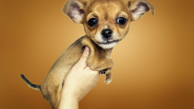 Do essential oils hurt dogs