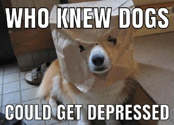 Medications for Dog Depression