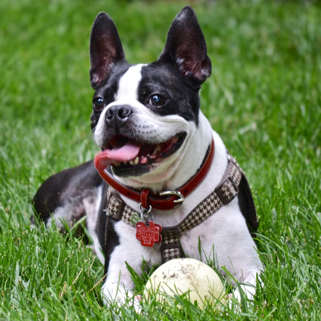 natural pain remedies for dogs
