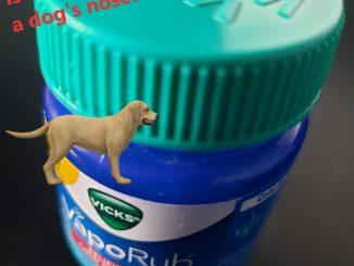 Safe to put vicks vapor rub on a dog's nose