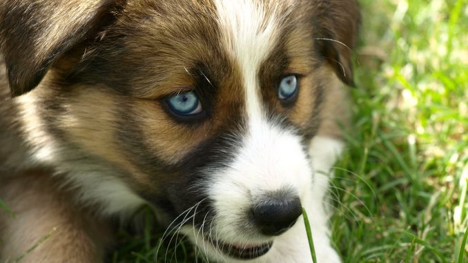 lyme vaccine for dogs pros and cons