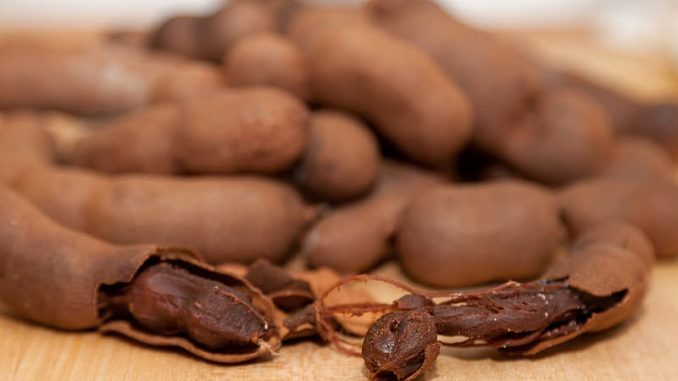 Tamarind is safe for dogs