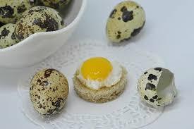 frozen quail eggs for dogs