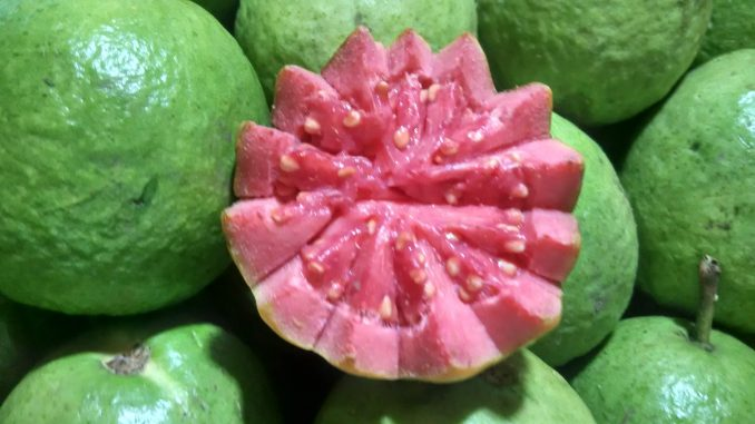 Is Guava poisonous to dogs