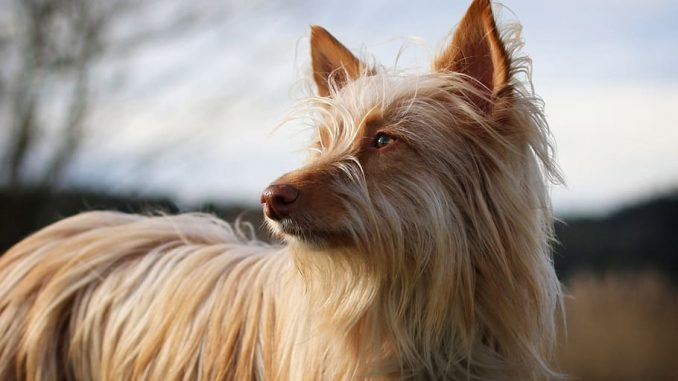 is coconut oil good for dogs with dry skin